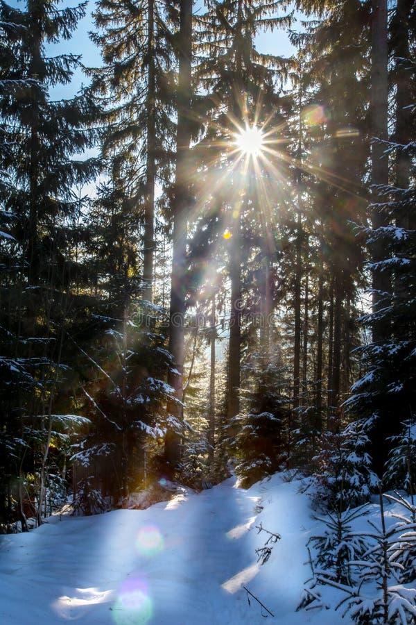 Een Zonnige dag in de winterbos stock afbeelding