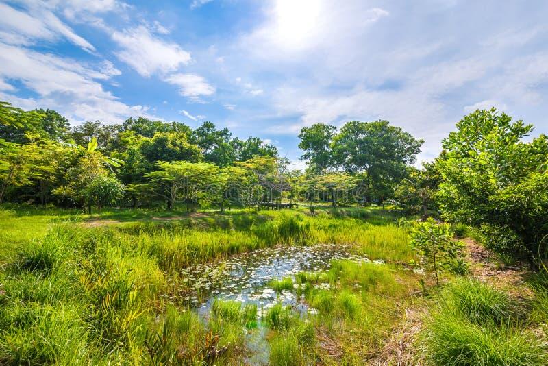 Een zonnige dag met vijver in het bos royalty-vrije stock fotografie