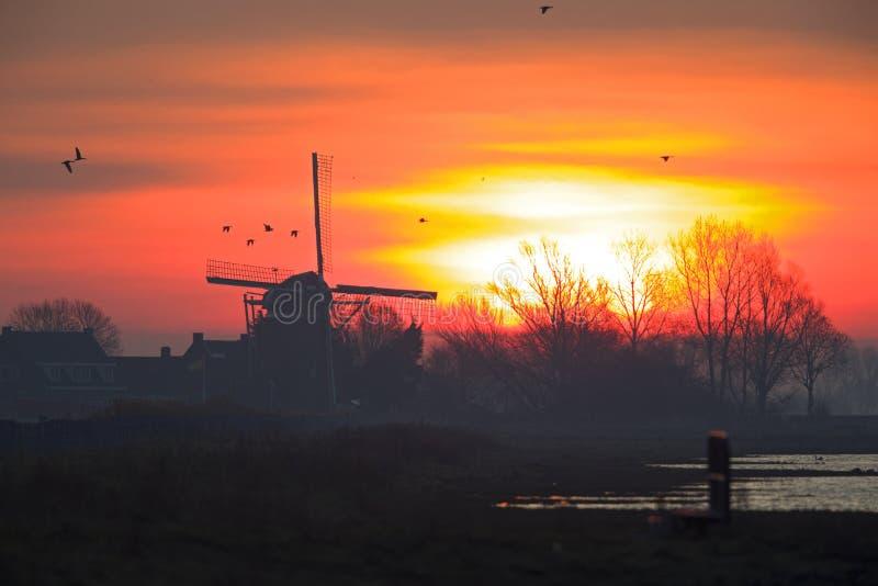 Een zonsopgang in Nederland met een het typische Nederlandse landschap en ganzen opstijgen stock foto