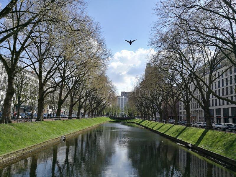 Een zwaan die op de Koning Street in de Stad van Dusseldorf vliegen royalty-vrije stock fotografie