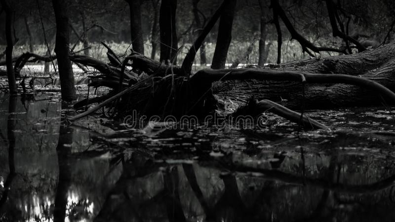 Een zwart-witte foto er hebben veel boom zoals zoals een bos stock foto