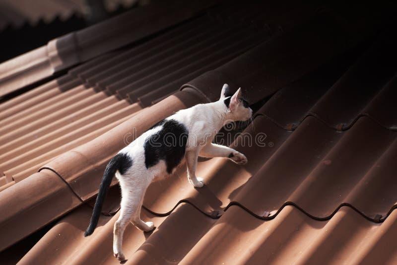 Een zwart-witte kat die op het dak lopen stock foto
