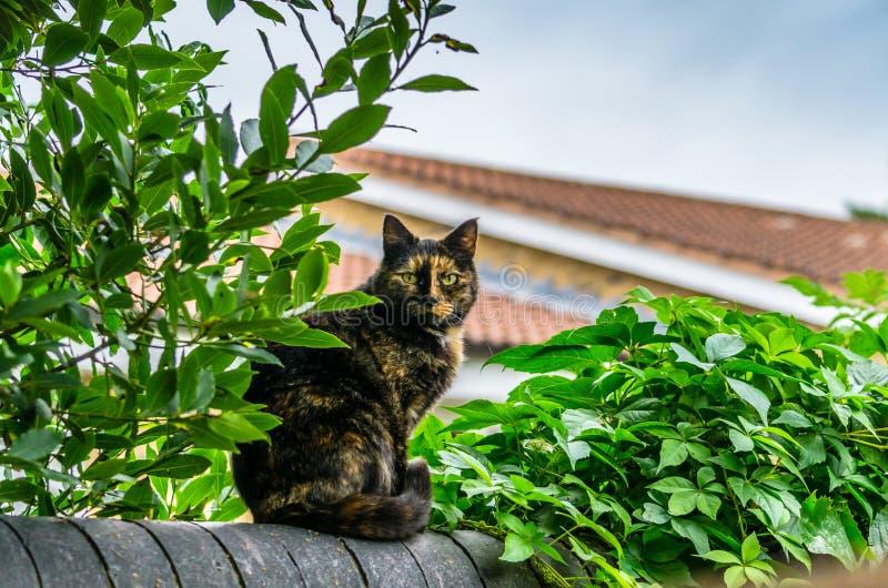 Een zwarte en gele kattenzitting op een tuinomheining royalty-vrije stock afbeelding