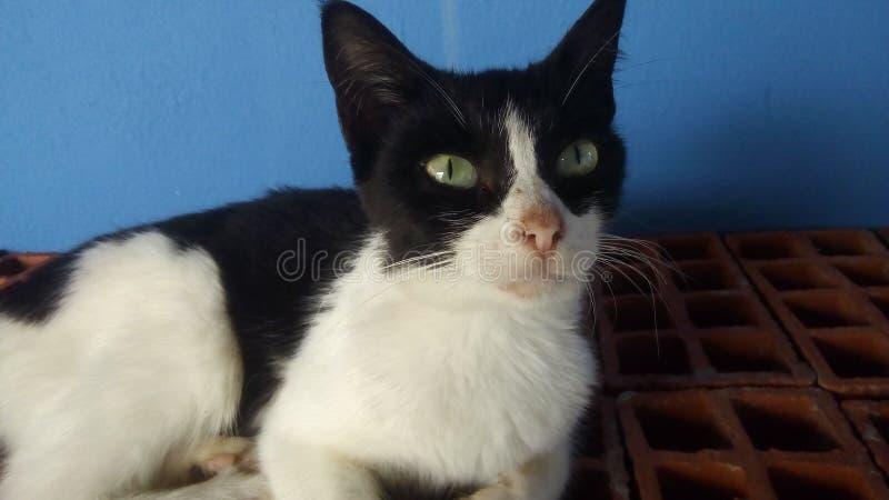 Een een zwarte en Whit kat stock foto's