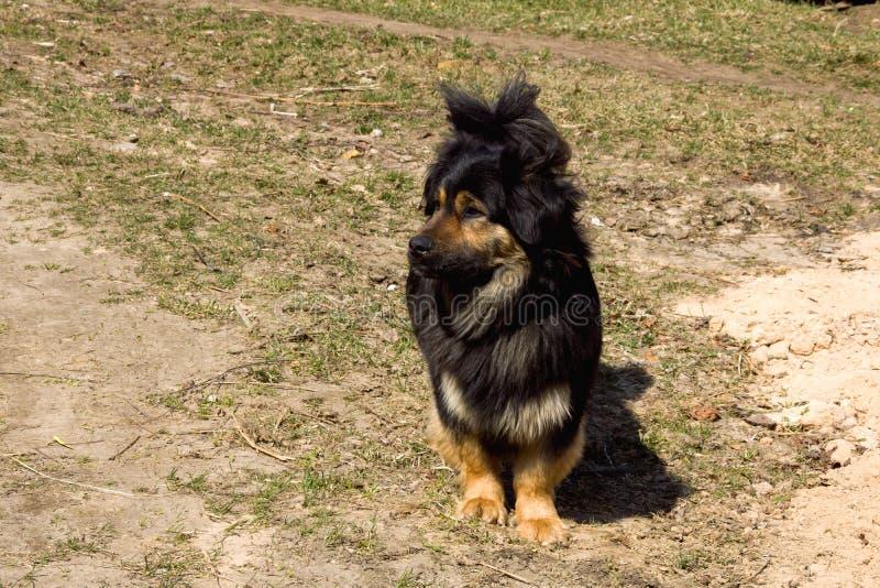 Een zwarte hond bevindt zich op het gras stock afbeeldingen