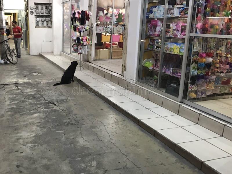 Een zwarte hond die naar de ingang van een opslag kijken royalty-vrije stock afbeelding