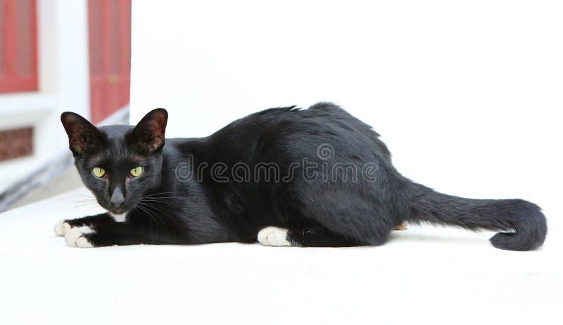 Een zwarte kat die en camera liggen bekijken stock afbeeldingen