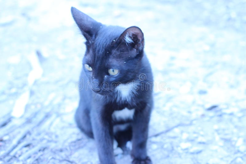 Een zwarte kat die in het gras in openlucht lopen stock foto's