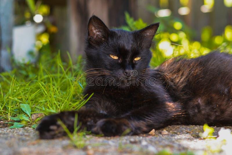 Een zwarte kat ligt op de grond in het dorp stock afbeelding