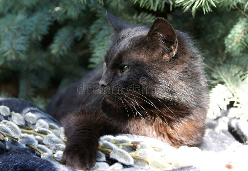 Een zwarte kat nestelt zich onder een Kalyuchey-Kerstboom op zachte wilgentakken stock fotografie
