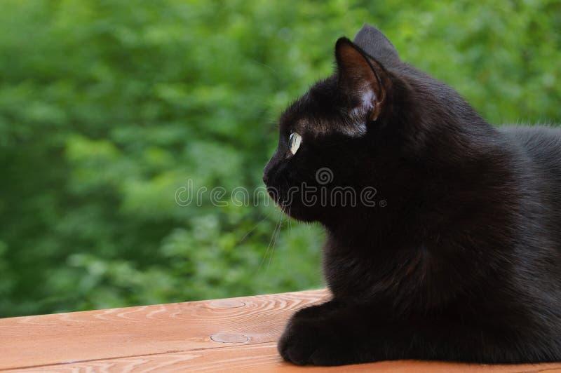 Een zwarte kat zit op de aard royalty-vrije stock foto's