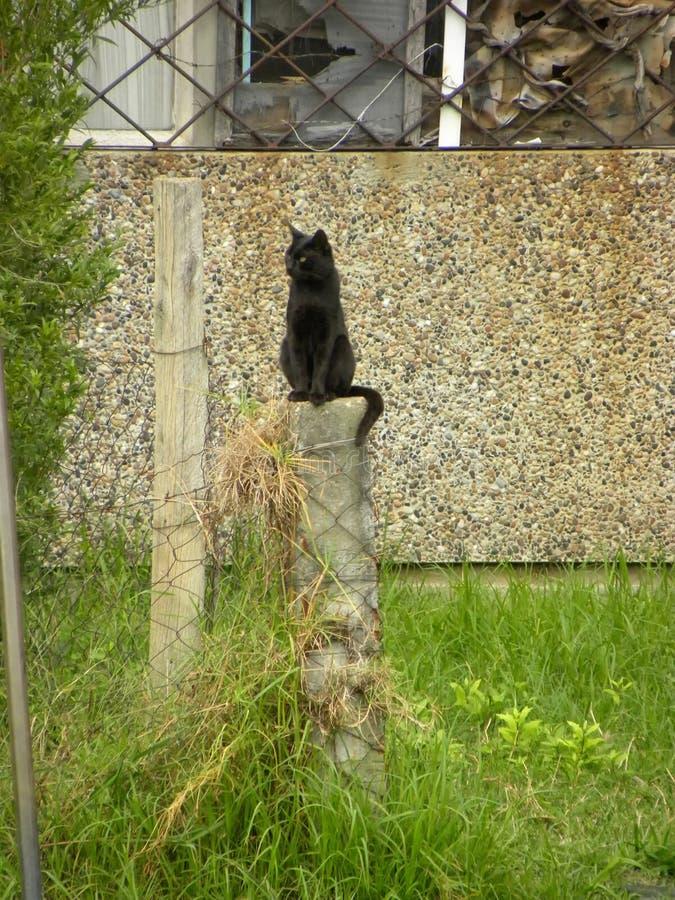 Een zwarte kattenzitting bovenop een kolom royalty-vrije stock fotografie