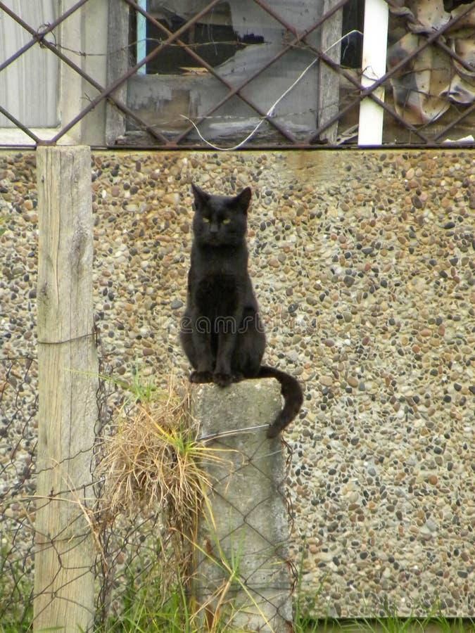 Een zwarte kattenzitting op een kolom stock afbeeldingen
