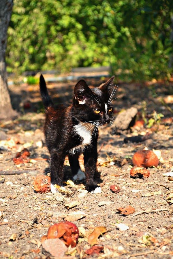 Een Zwarte Prachtige en Ernstige Kat royalty-vrije stock afbeelding