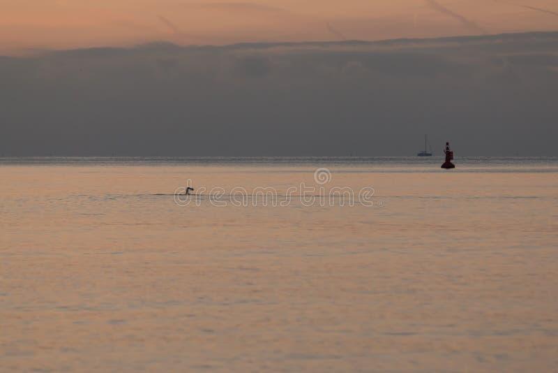 Een zwemmer die een vroege ochtendonderdompeling in het overzees nemen in Brighton stock afbeelding