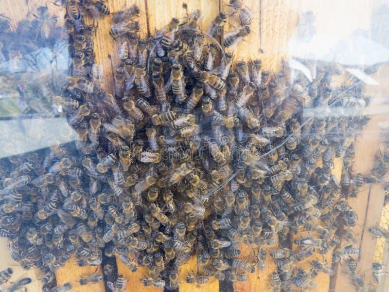 Een zwerm van bijen duidelijk stock afbeeldingen