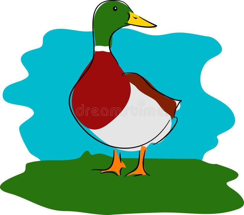 Download Eend vector illustratie. Illustratie bestaande uit wildlife - 47479