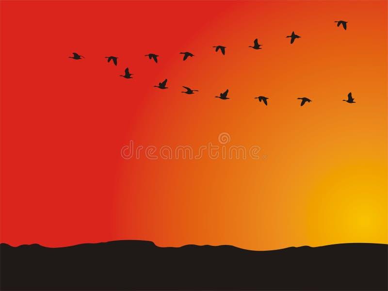 Eenden die wegvliegen stock illustratie