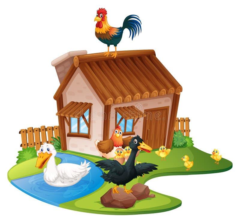 Eenden en kippen op het landbouwbedrijf royalty-vrije illustratie