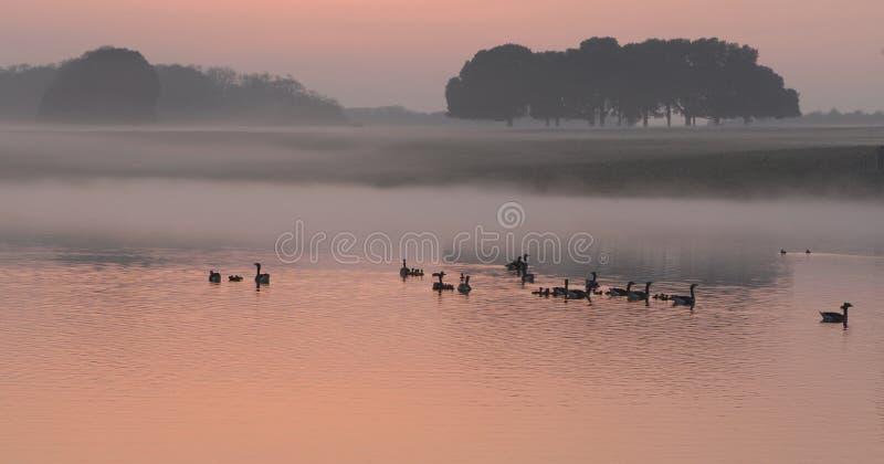 Eenden op zonsondergangmeer royalty-vrije stock afbeeldingen