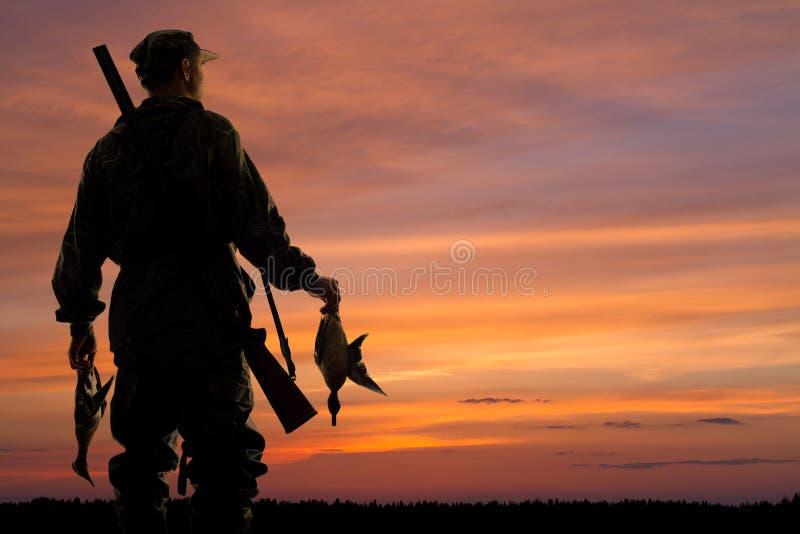 Eendjager met prooi bij zonsondergang stock foto