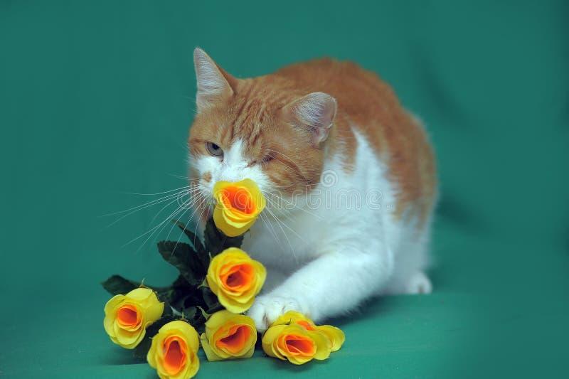 Eenogige Kat stock foto