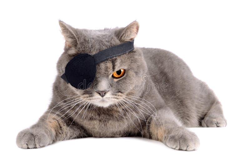 Eenogige kat stock afbeelding