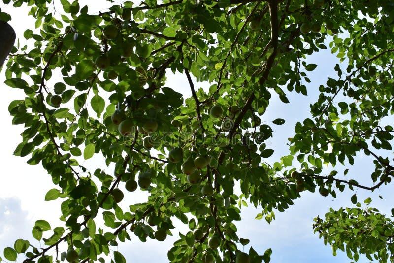 Eenvoudig beeld van een boom stock fotografie