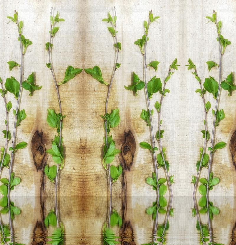 Eenvoudig ontwerp, jonge groene kersentakken, het concept ecologie royalty-vrije stock afbeeldingen