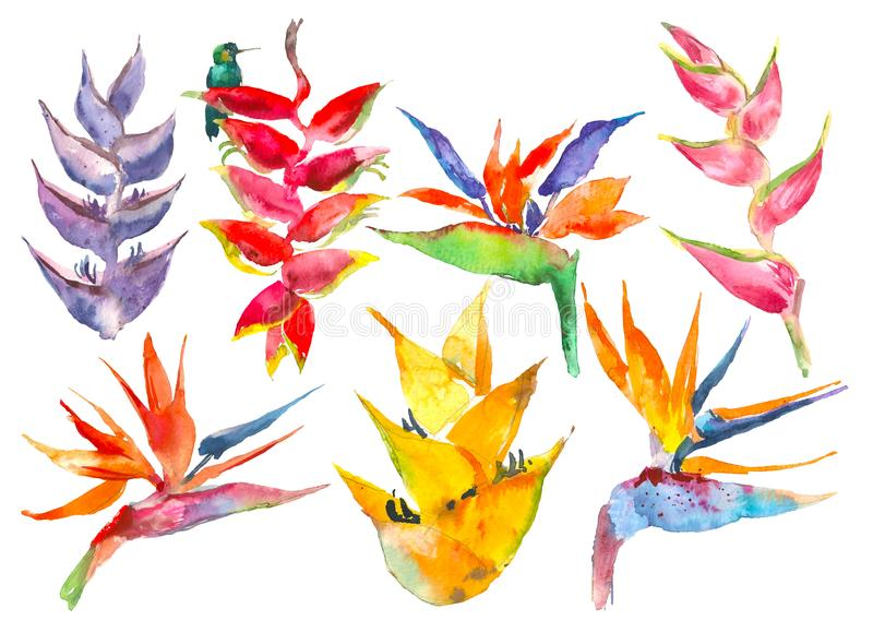 In eenvoudige bloemeninzameling Waterverfbloemen van calathea, strelitzia Tropische wildernisdruk Exotische reeks voor royalty-vrije illustratie