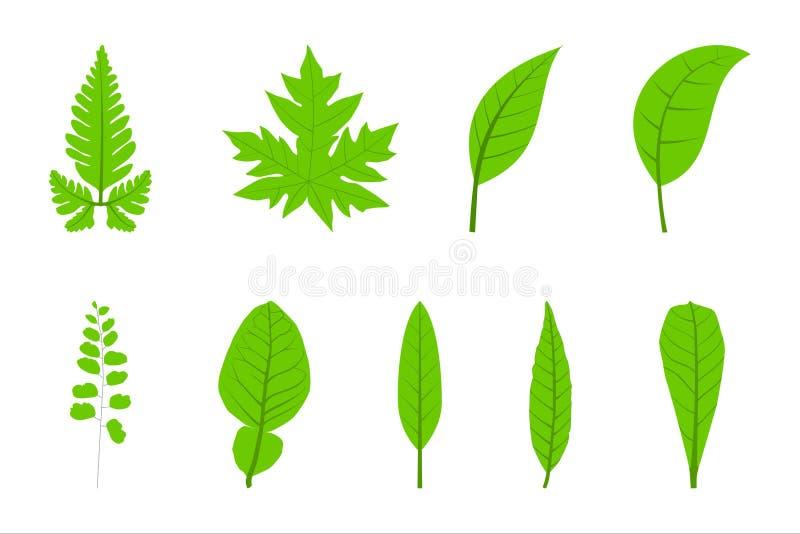 9 eenvoudige gekleurd Blad groen vector illustratie