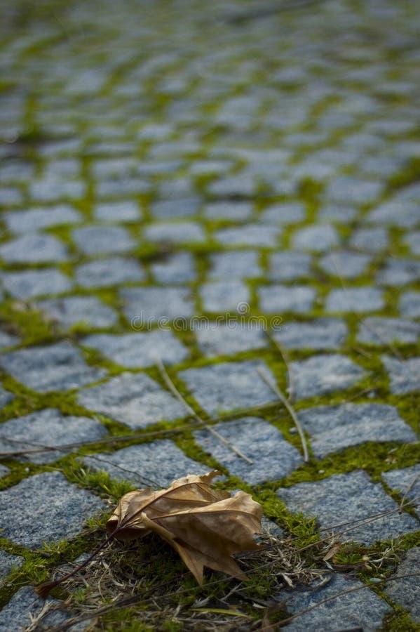 Eenzaam blad stock afbeelding