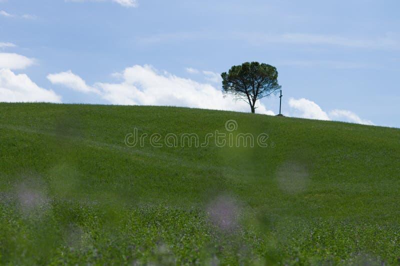 Eenzaam boom en kruis, Toscaan stock foto's
