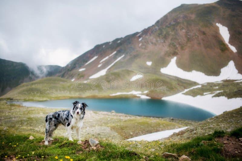 Eenzaam hondverblijf bij de van de bergen achtergrond en sneeuw rotsen en blauw meer royalty-vrije stock fotografie