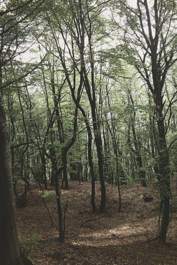 Eenzaam hout stock afbeeldingen