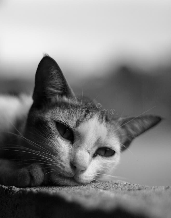 Eenzaam Katje royalty-vrije stock foto