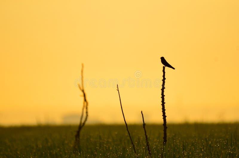 Eenzaam landschap stock foto's