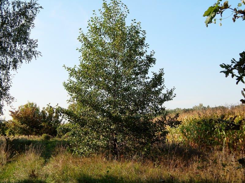Eenzaam met groene bladerenboom stock foto