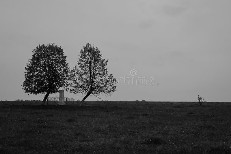 Eenzaam paar van bomen stock afbeeldingen