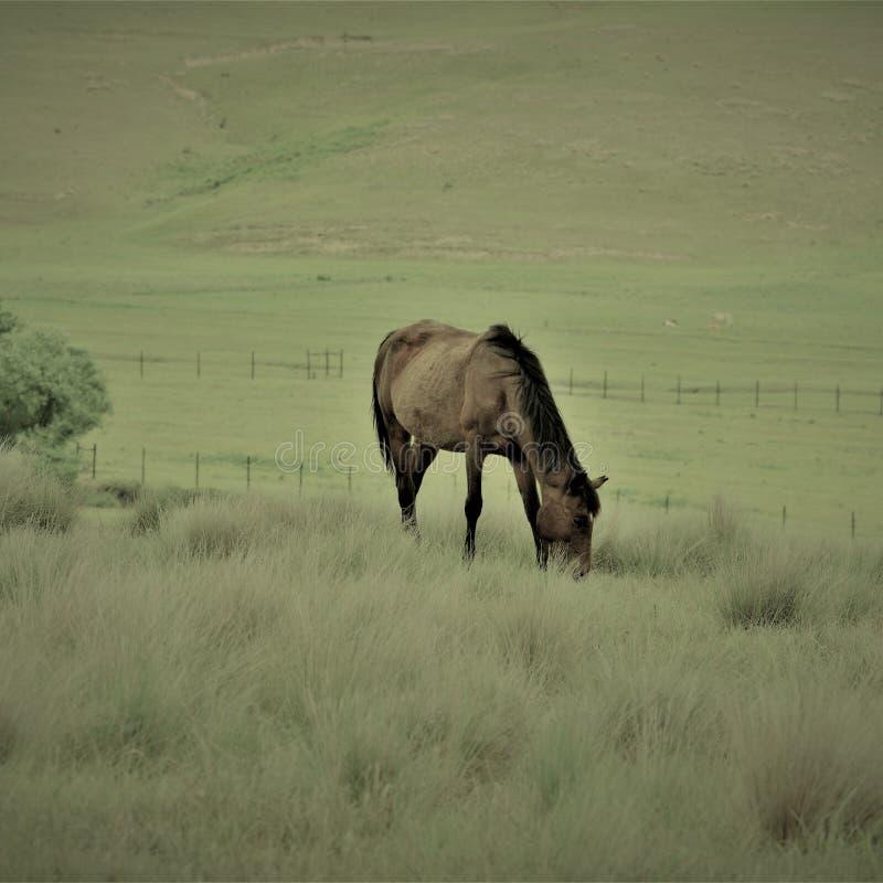 Eenzaam Paard royalty-vrije stock afbeelding