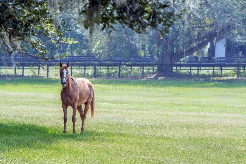 Eenzaam paard in een Zuidelijk weiland royalty-vrije stock afbeelding