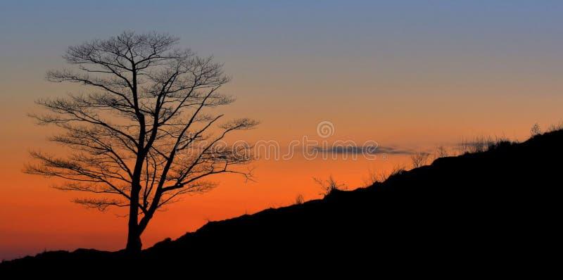 Eenzaam Silhouet op een Heuvel stock afbeelding