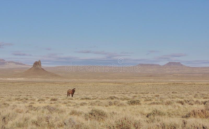 Eenzaam wild paard royalty-vrije stock afbeelding