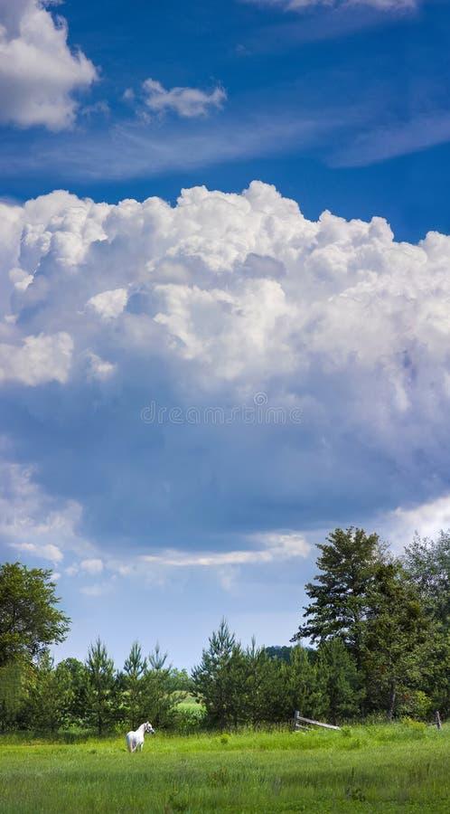 Eenzaam wit paard op groen weilandgebied op een zonnige dag met bl stock foto's