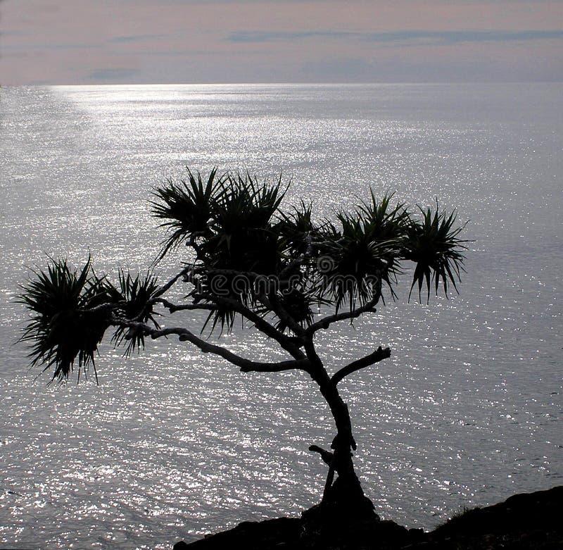 Download Eenzaamheid stock afbeelding. Afbeelding bestaande uit naturalness - 279971