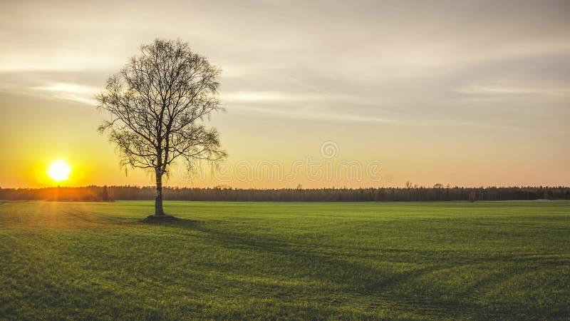 eenzaamheid royalty-vrije stock afbeeldingen