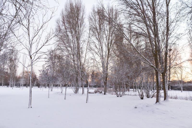 Eenzaamheid en Parkbank met Lege Sneeuw stock foto's