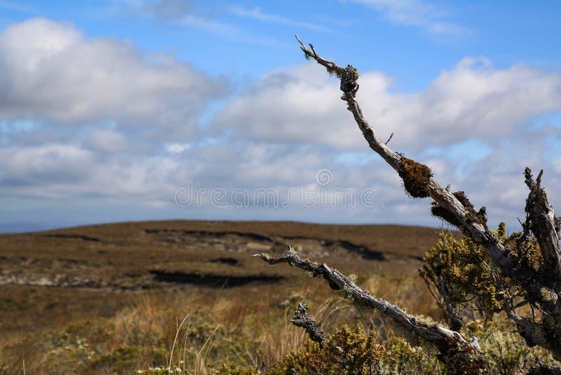 Eenzaamheid in steppe stock foto's