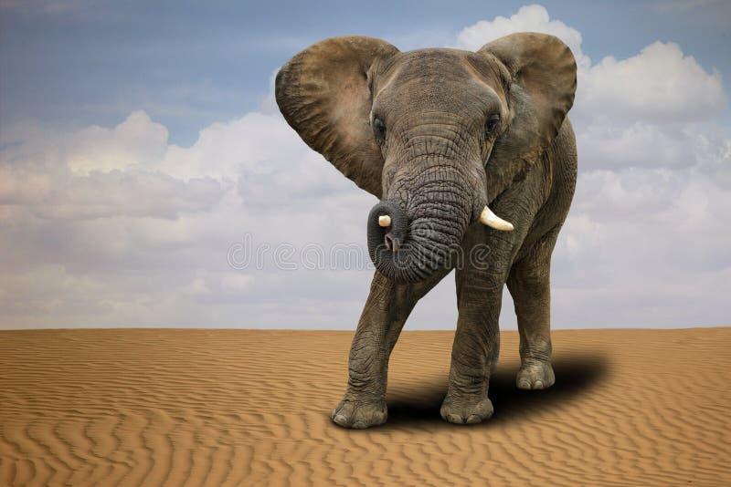Eenzame Afrikaanse Olifant in openlucht in Daglicht royalty-vrije stock afbeelding