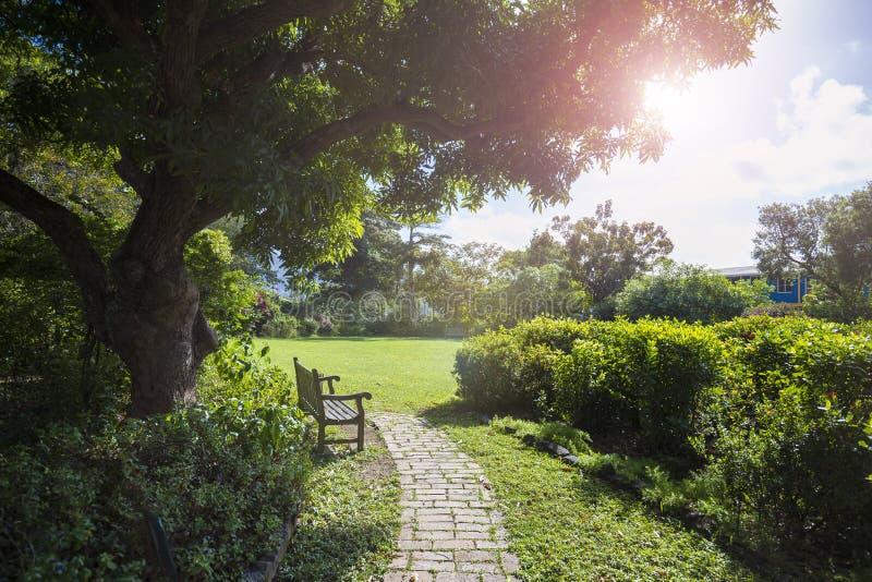 Eenzame bank in een botanische tuin Wegstad, Tortola royalty-vrije stock foto